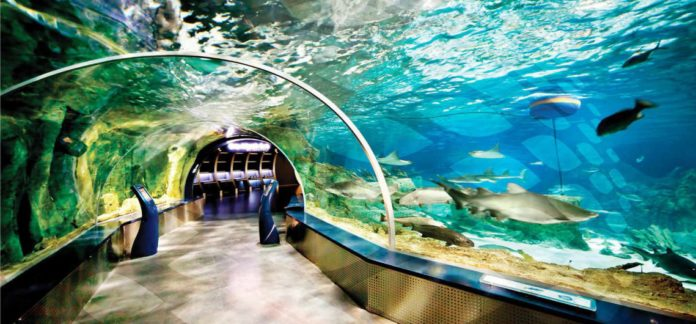 اكواريوم السمك